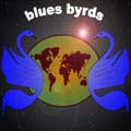 The Blues Byrds - Michael Lyzenga -