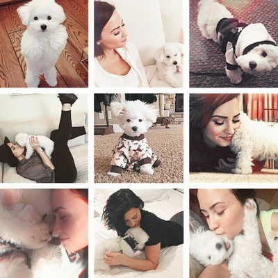 Lovato-thanks-fans-for-puppy-support